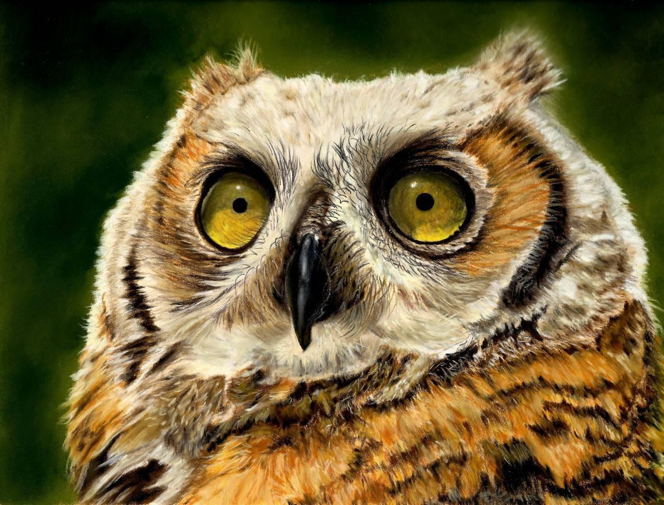 Claudia Jorio - Pride-Juvenile Great Horned Owl - 16x20 - Pastel